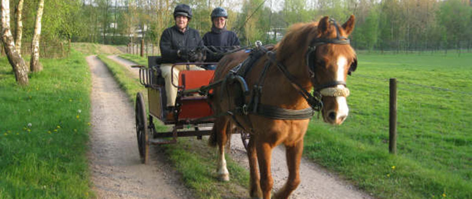 Ceffyl Du Carriage Driving for the Disabled