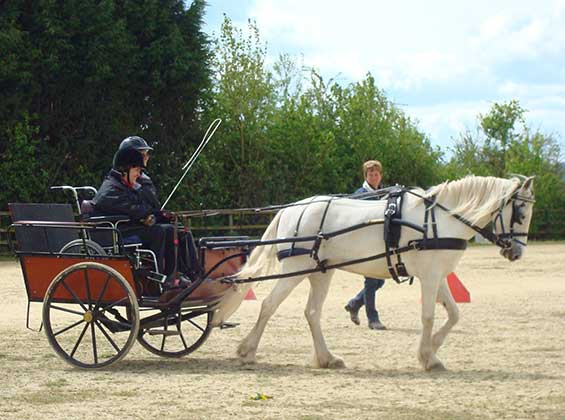Image of Ceffyl Du Carriage Driving for the Disabled