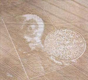 Cereology Crop Circles